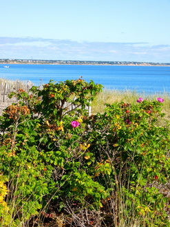 late Summer in Truro, MA. (Cape Cod)