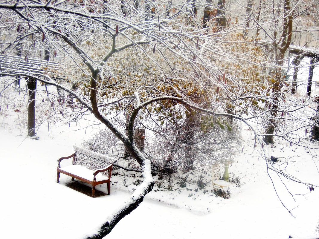 Winter woods and bench